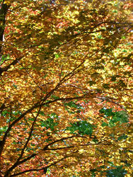 93-autumn_leaves3035.jpg
