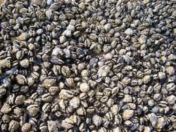 142-barnacles_3639.jpg