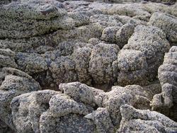 143-barnacles_3645.JPG