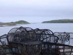 50   crab pots