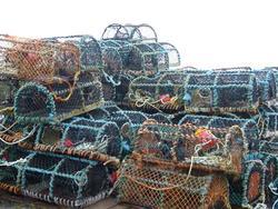 51   crab pots