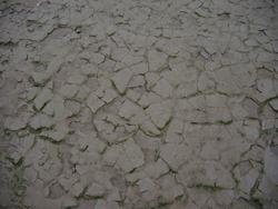 148-cracked_mud_0895.JPG