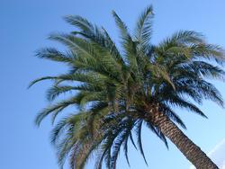 118-palm_trees_2929.jpg