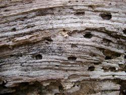 169-rotten_wood_3094.jpg