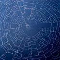 199-spider_web_4051.jpg