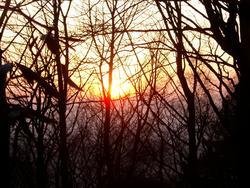 89-sunset_trees_2408.JPG