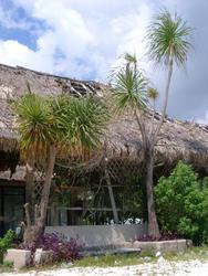 69-tropical shack