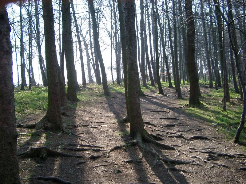 a woodland footpath walk, trees and fresh air, england