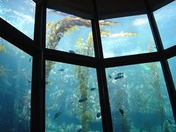 859-aquarium_02096.JPG