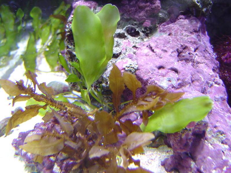 aquarium plants and corals photo title aquarium plants keywords plant ...