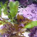 1228-aquarium_plants_02360.JPG