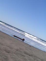 909-barren_beach_02163.JPG
