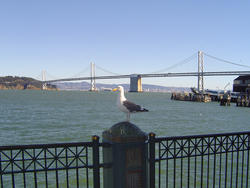954-bay_bridge_01884.JPG