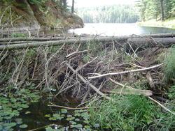 696-beaver_dam_algonquin_01046.jpg