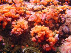 861-coral_orange_polips_02078.JPG