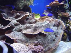 862-coral_reef_02083.JPG