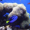 863-coral_reef_02086.JPG