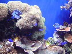 864-coral_reef_02088.JPG