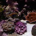 1234-corals_1273.JPG