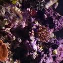 1235-corals_1277.JPG