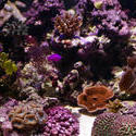 1236-corals_1290.JPG