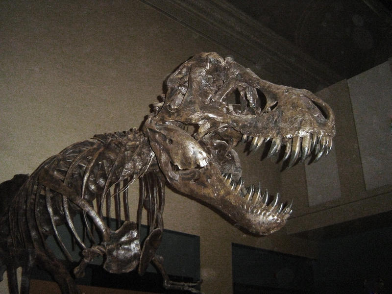 Dinosaur Bones Museum Of Natural History