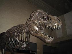 658-dinosaur_bones_museum472.jpg