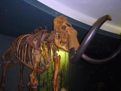 659-dinosaur_bones_museum474.jpg