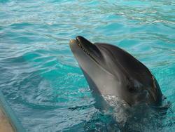 660-dolphin_158.jpg