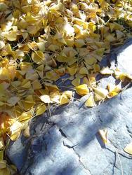 889-fallen_leaves_02199.JPG