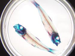 936-fish_skeleton_02252.JPG