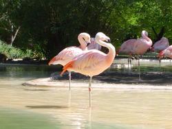 664-pink flamingos