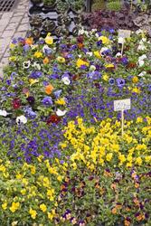 1148-flower_stall_1787.jpg