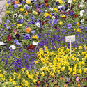 1148-flower_stall_1787.jpg