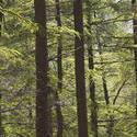 1085-forest_trees_2097.jpg