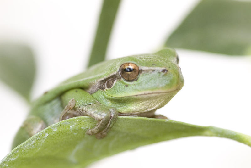 a small green tree frog on a leaf