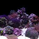 1241-hard_corals_02399.JPG