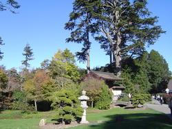 989-japanese_tea_gardens02178.JPG