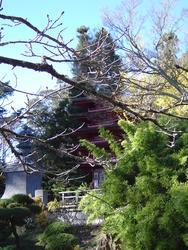 992-japanese_tea_gardens02181.JPG