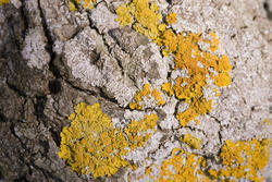 1113-litchen_yellow_rock_P1777.jpg