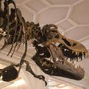 808-museum_dinosaur_2427.jpg