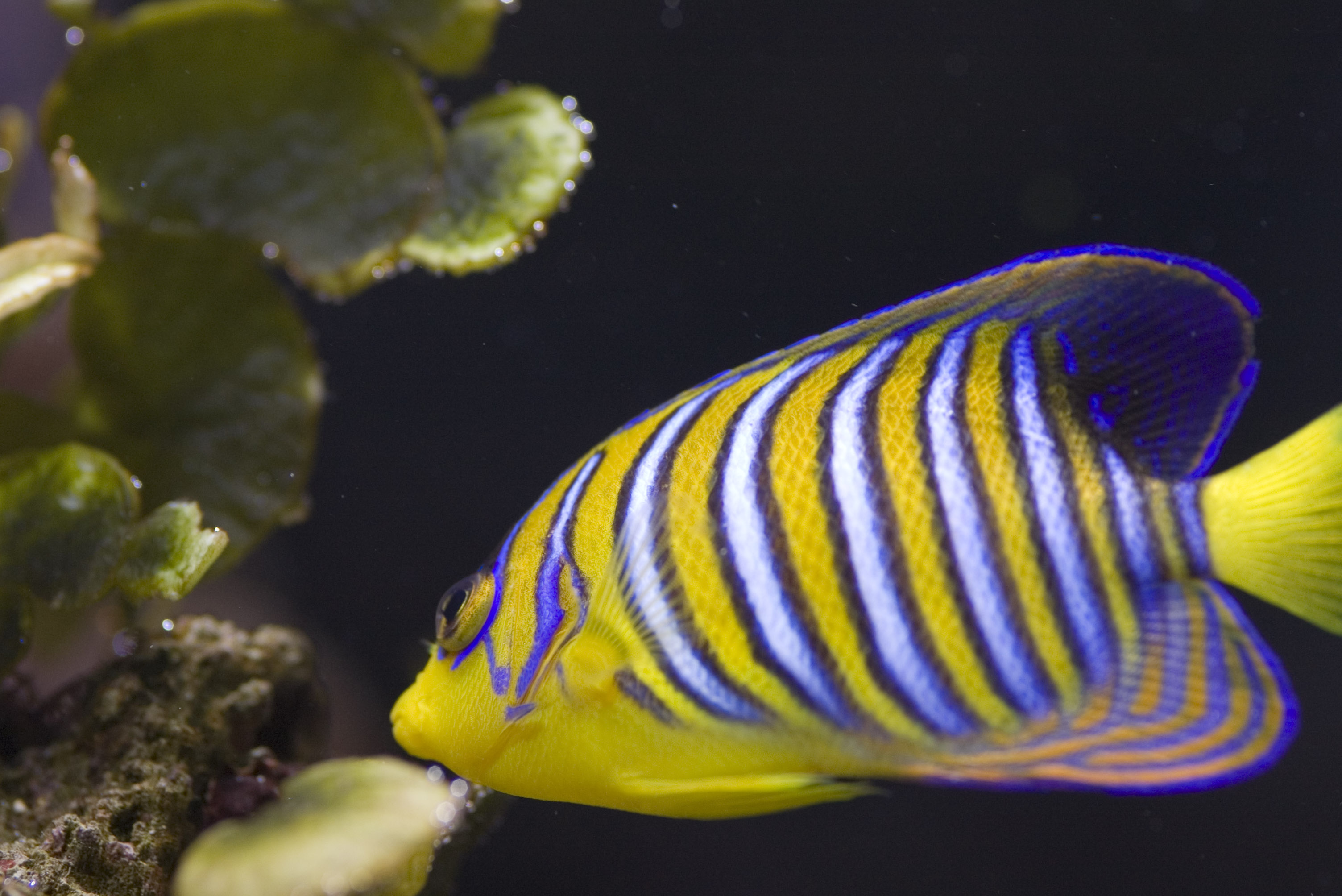 Striped fish images