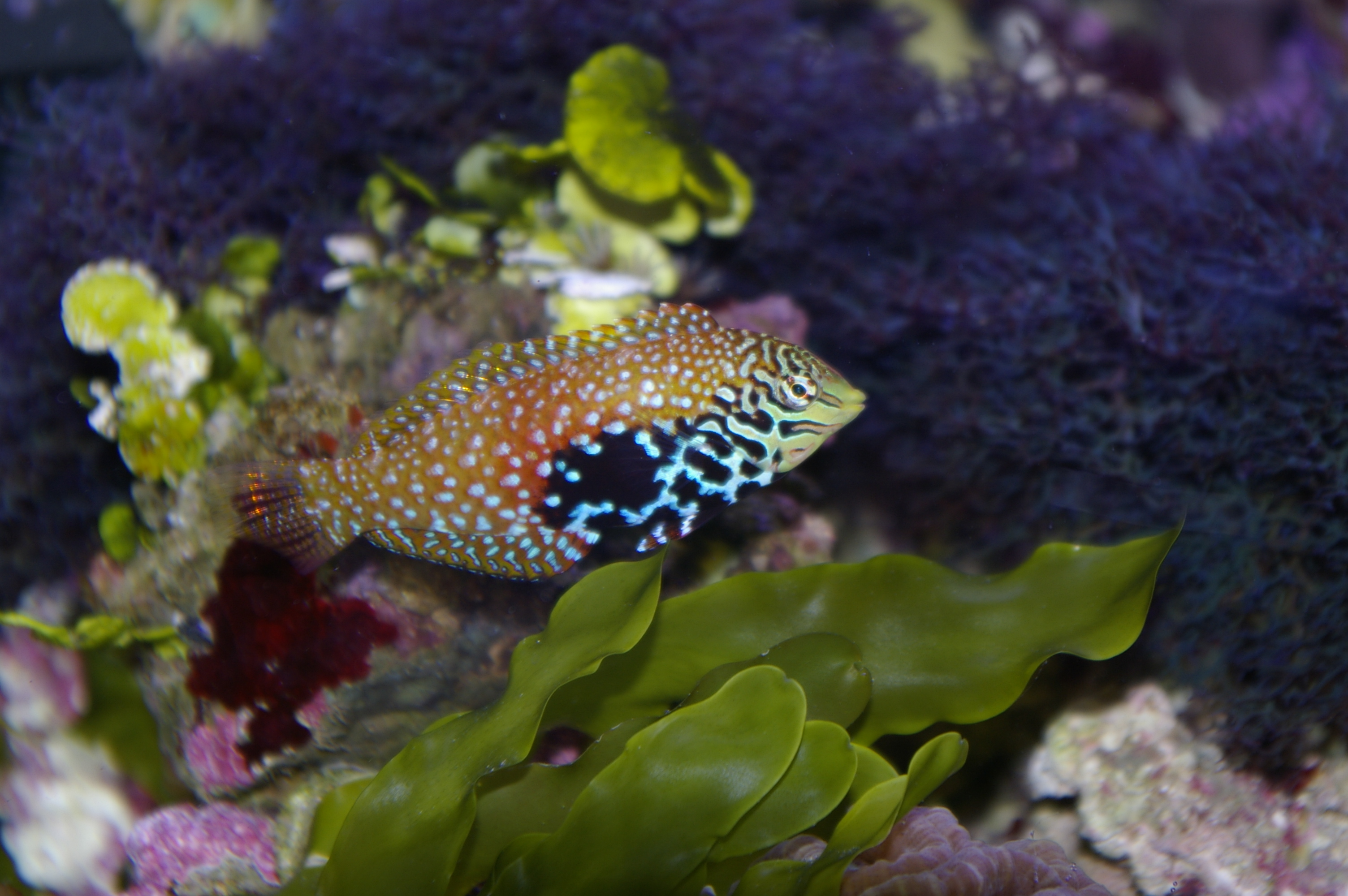 Live corals auto design tech for Exotic saltwater fish