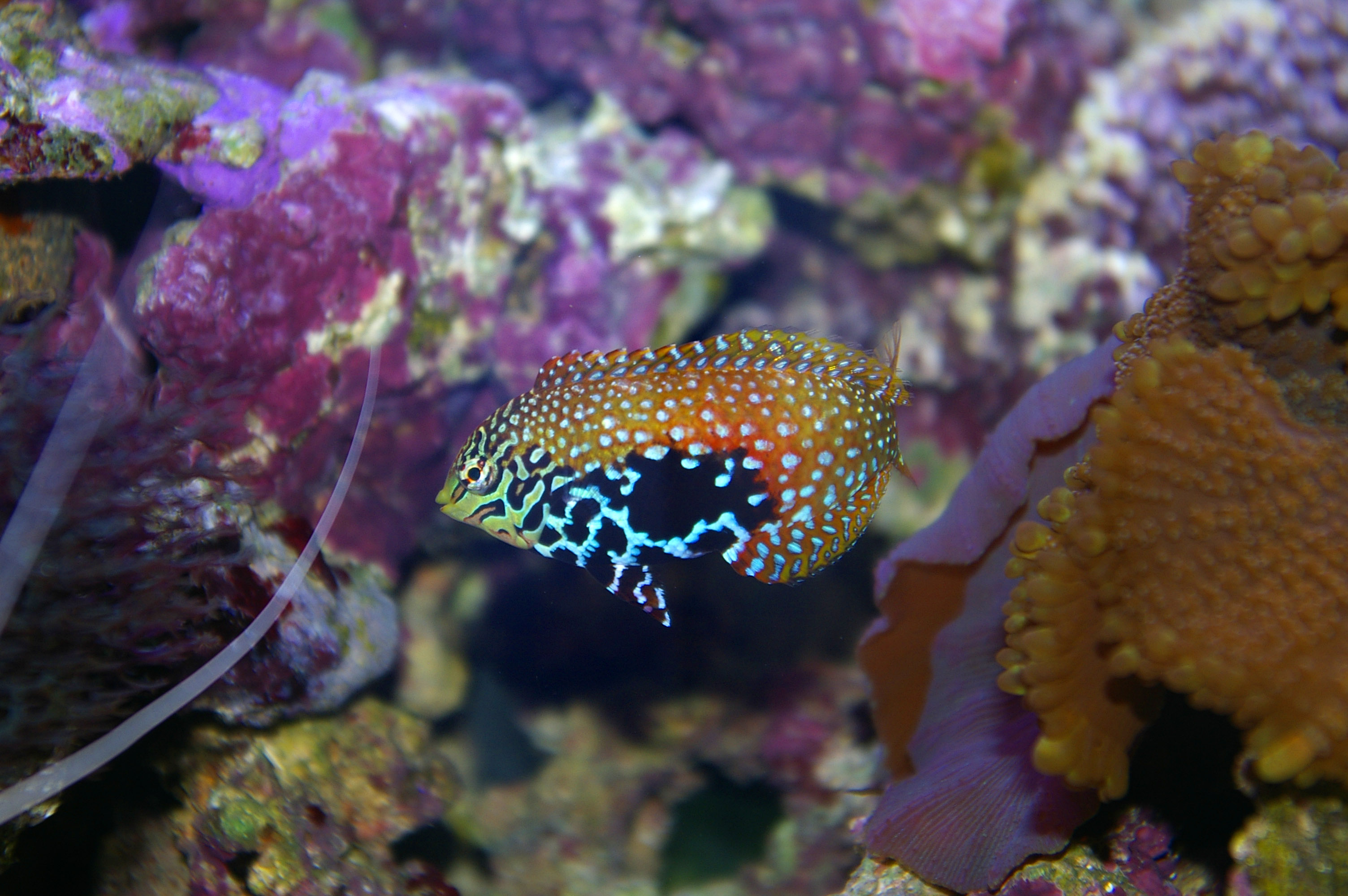 colourful saltwater tropical fish photo title saltwater tropical fish ...