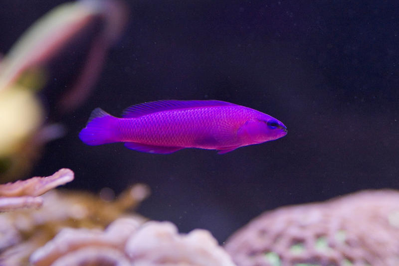 colourful saltwater tropical fish