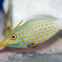 1215-saltwater_tropical_fish_2136.jpg