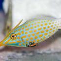 1215-saltwater_tropical_fish_2136.jpg