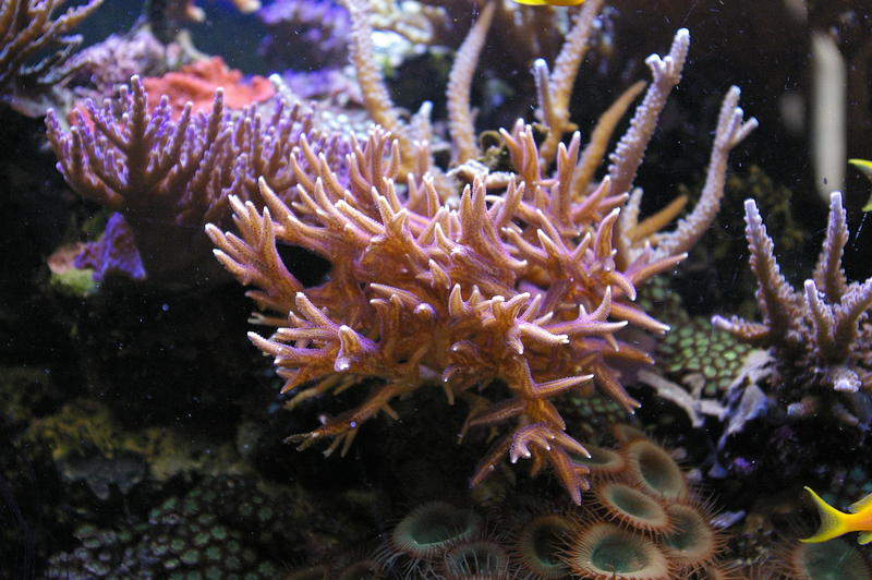 amazing natural beauty of a tropical coral reef, staghorn coral and soft corals