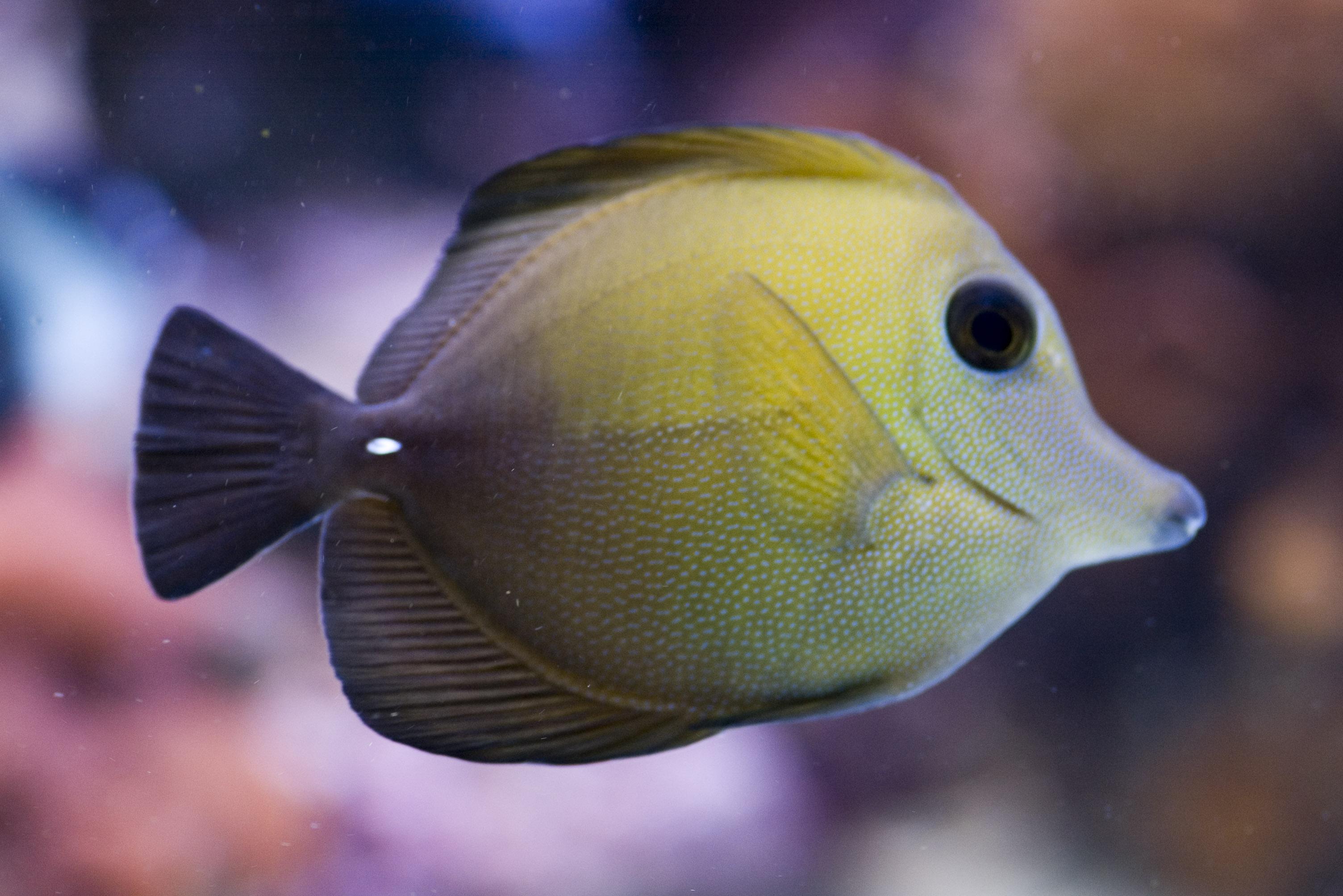 Free Stock Photo 1256-tank_fish_P1541.jpg | freeimageslive