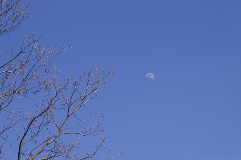 winter moon in a blue sky